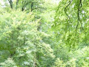 Actualidad medioambiental, colaboración de Balsan y la ONF (Oficina Nacional de Bosques)