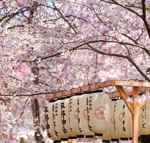 Inspiracion deco flores cerezo japon